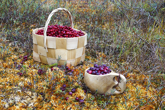 Superberries cranberries (Photo: visitfinland.fi)