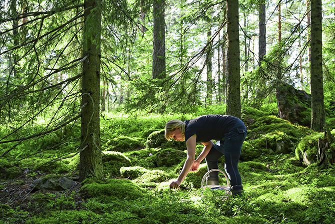 bilberry_picker_in_finnish_forest_visitfinland-com